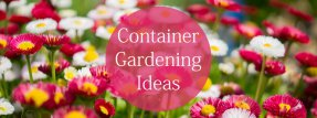 Container Gardening Ideas For Great Plant Pots All Year Round